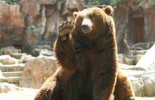 Dónde ver osos en España