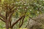 Hotal Sagar Lore casa rural en Astigarraga ()