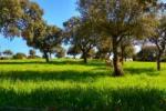 Complejo Turístico de Sardón casa rural en Sardon De Los Frailes ()