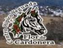 Flor de Cardonera
