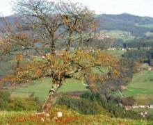 Casa Camilo casa rural en Pravia (Asturias)