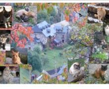 Casa Fontamil casa rural en Gistain (Huesca)
