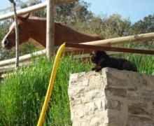 Cal So casa rural en Talavera (Lleida)