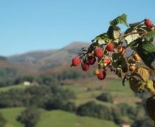 Jaimeneko Borda casa rural en Amaiur (Navarra)