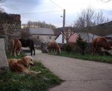 La Reserva casa rural en San Martín De Los Herreros (Palencia)