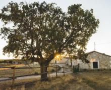 Dehesa de Montealto
