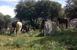 Grazalema a Caballo en Grazalema (Cádiz)