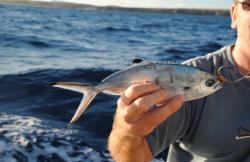Pesca en Lanzarote en Puerto Del Carmen (Lanzarote)