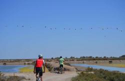 Bike Tour Doñana en Sanlucar De Barrameda (Cádiz)