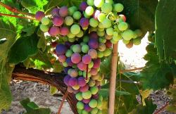 Bodegas Martinez Palacios en Ollauri (La Rioja)