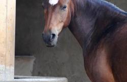Connemara Pony Club en Sant Mori (Girona)