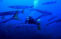 Happysub Diving Center en Menorca (Menorca)