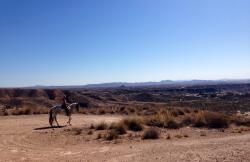 Rancho Luz del Sol en Partaloa (Almería)
