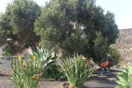 La Tahonilla casa rural en Tias (Lanzarote)