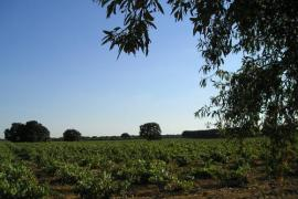 La Navarra Vieja casa rural en Villarrobledo (Albacete)
