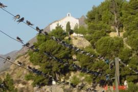 Ven a la Libertad de la Montaña de Alicante
