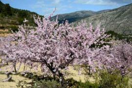 Ven a Primavera en Marzo