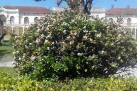 Termas da Curia casa rural en Curia (Aveiro)