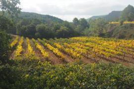 Actividad entre viñas.