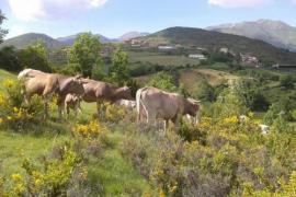 Turismo Rural Castell casa rural en Neril (Huesca)