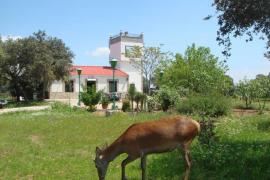 San Jose casa rural en Andujar (Jaén)