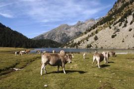 Disfruta de tus vacaciones en la Vall de Boí