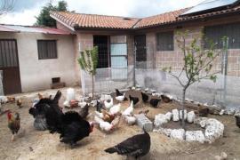 Enebral de las Hoces casa rural en Fuenterrebollo (Segovia)