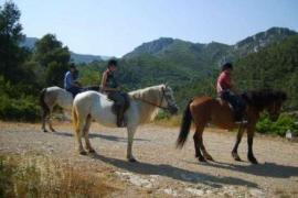 La Vall de Silvestre casa rural en Mas De Barberans (Tarragona)