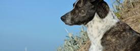 Concurso de perros para los días 5 y 6 de abril