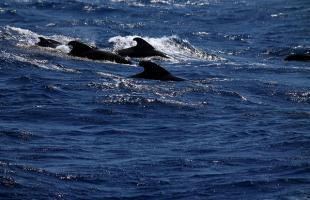 Dónde ver ballenas en España