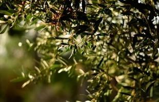 Oleoturismo: adéntrate en el mundo del aceite de oliva