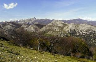 Palencia: románico palentino y turismo ornitológico