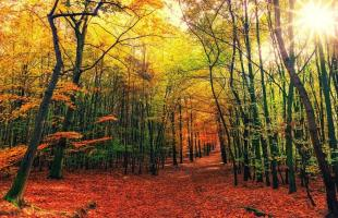 7 hayedos en España para conocer en otoño