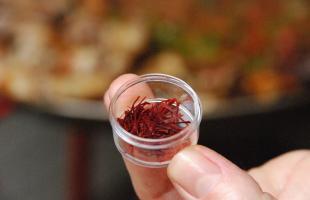 Descubre la recogida del azafrán