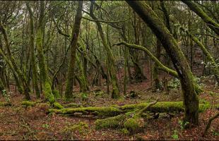 Sitios naturales en la isla