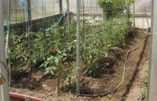 Casas rurales con huertos ecológicos