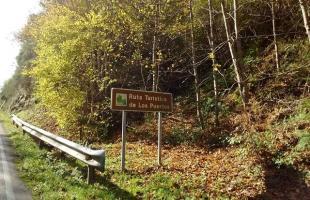 Fuentes del Narcea: la profundidad de un bosque