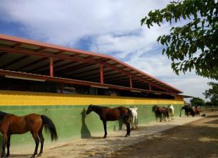 Centro Hipico Poni Club