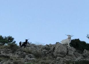 Caserío Inazares