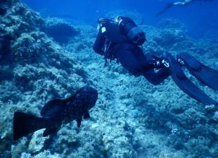 Michael Diving School