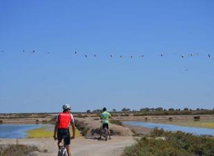 Bike Tour Doñana