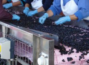 DeVinus Wine and Food Tours Madrid