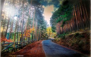 Descubre las zonas más naturales de Madrid