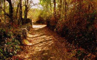 6 hayedos en España para conocer en otoño