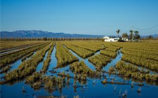 5 planes imprescindibles para descubrir el Delta del Ebro