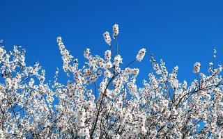 Qué hacer con niños en primavera: actividades, animales y paisajes