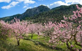 Los mejores lugares para ver almendros en flor en España