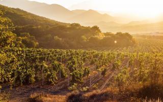 Las 14 mejores rutas del vino en España