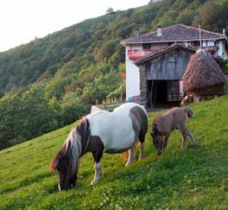 Ofertas turismo rural Navarra