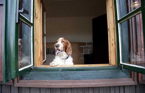 10 casas para viajar con mascota y con reserva online